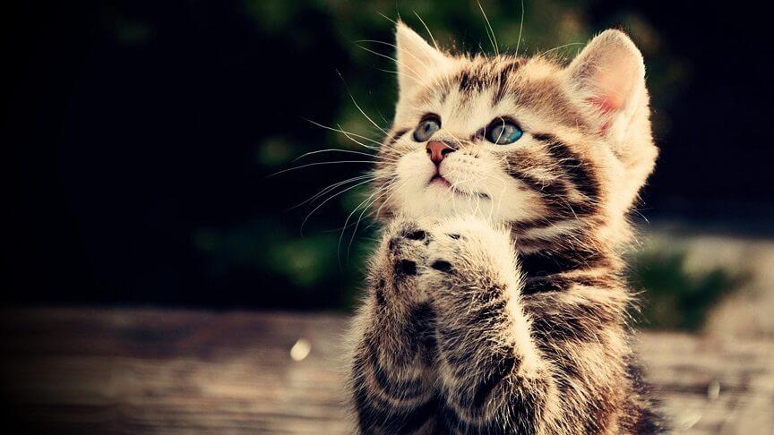 占いサロン 摩訶不思議 猫 祈り お願い 占い 大阪