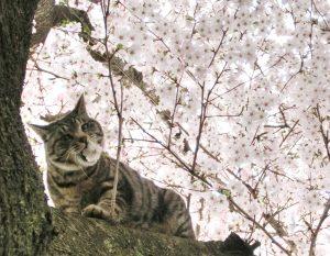 占いサロン 摩訶不思議 占い 大阪 心斎橋 当たる 猫
